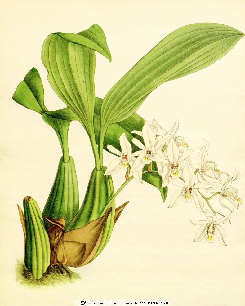 手绘花卉 手绘 花卉 绘画 植物 写实 水彩 小品 艺术 设计 文化艺术