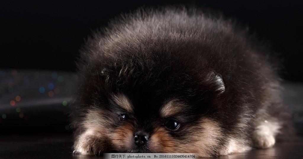 小动物 萌萌小动物 电脑壁纸 很萌的小动物 呆萌小动物 摄影 生物世界
