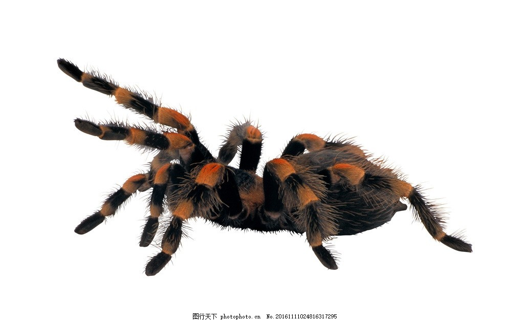 蜘蛛 大蜘蛛 节肢动物 摄影