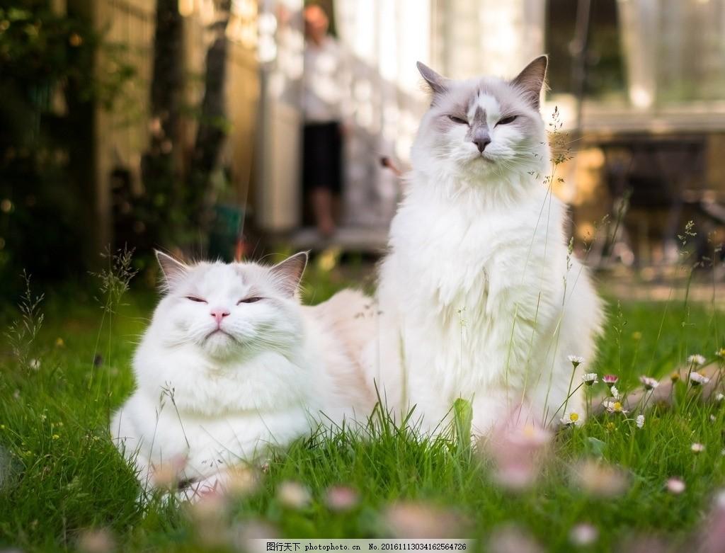 宠物猫 小猫 猫咪 花猫 可爱的小猫 动物 动物世界 可爱猫 可爱猫咪