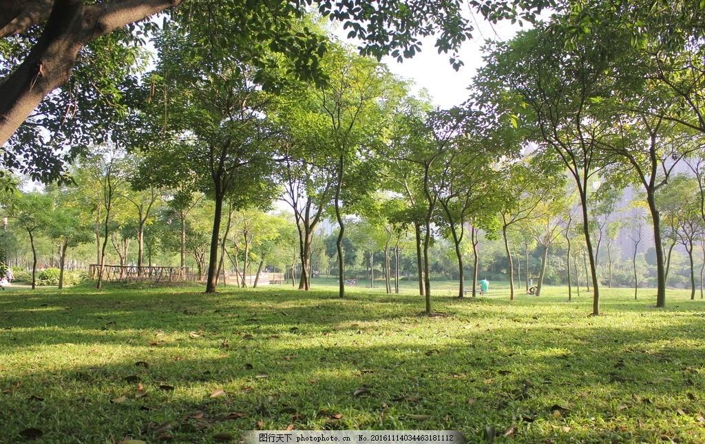 树,树林 公园 草坪 植物 摄影-图行天下图库