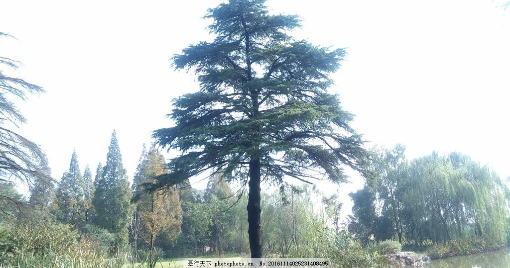树枝 树木 树 枝桠 小树 摄影 生物世界 树木树叶 72dpi jpg