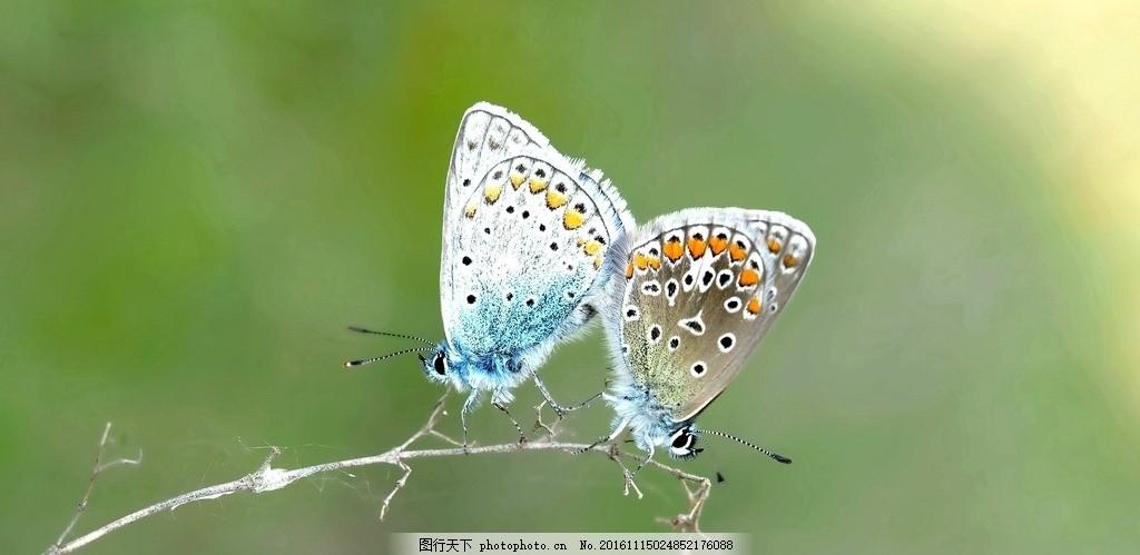 蝴蝶 花丛 生态 春天 植物 绿化 昆虫 花朵 花园 花草 摄影 生物世界