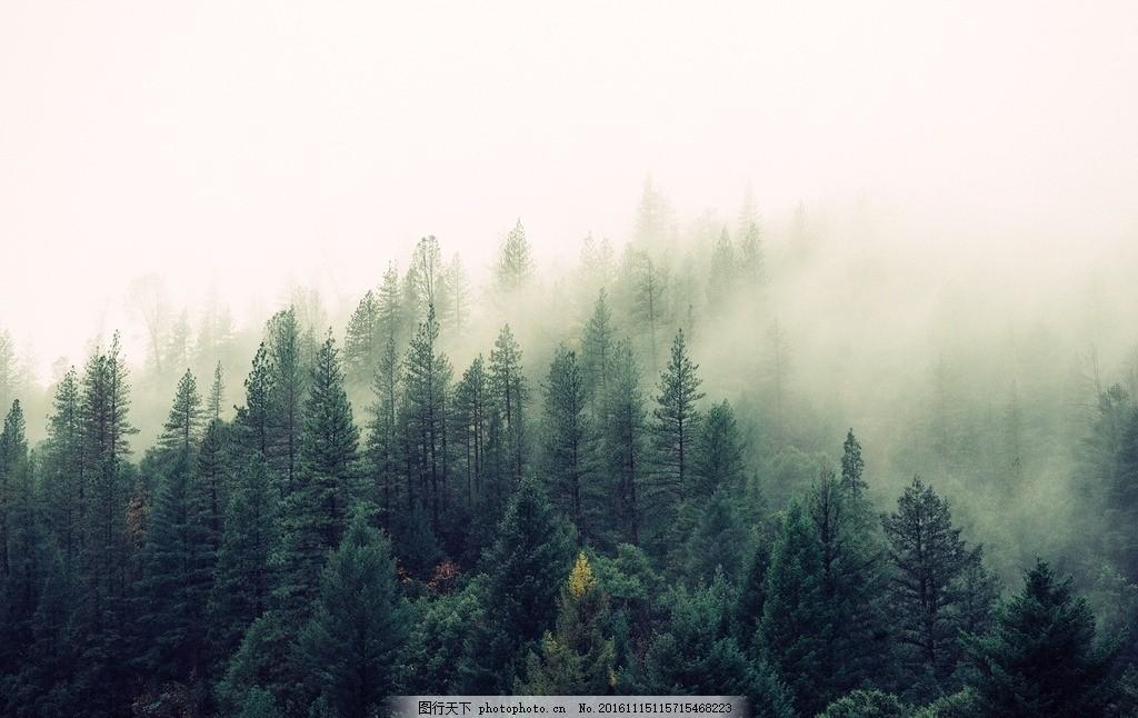 森林云雾 原始 森林 树林 大树 迷雾 雾气 梦幻 奇幻 丛林 绿色 云雾