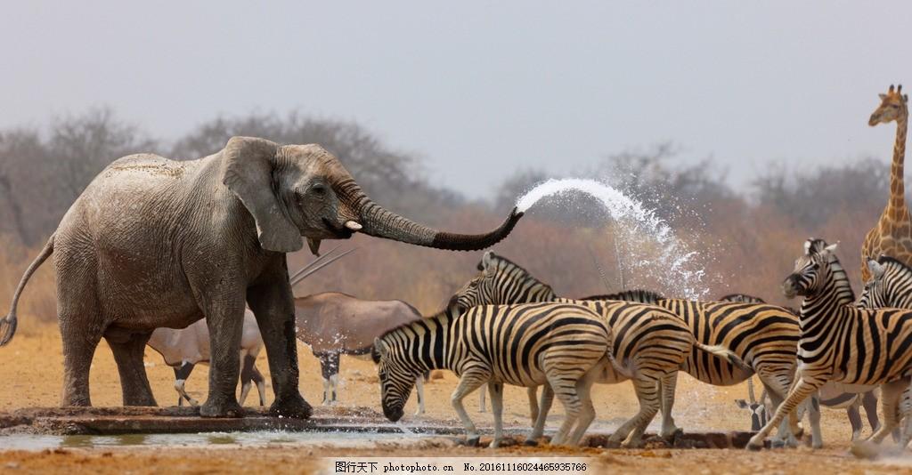 非洲动物 野性 动物园 非洲草原 猛兽 野兽 凶猛 哺乳动物 大象