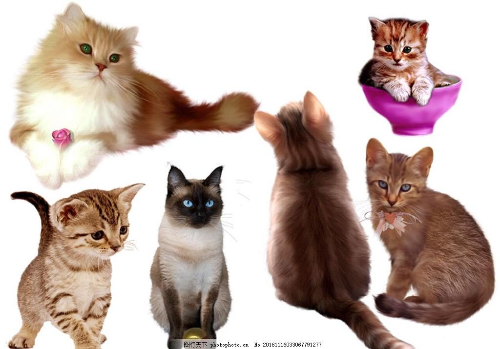 高质量插画风格可爱猫咪分层图 小猫 猫咪 可爱猫咪 小可爱 插画猫咪