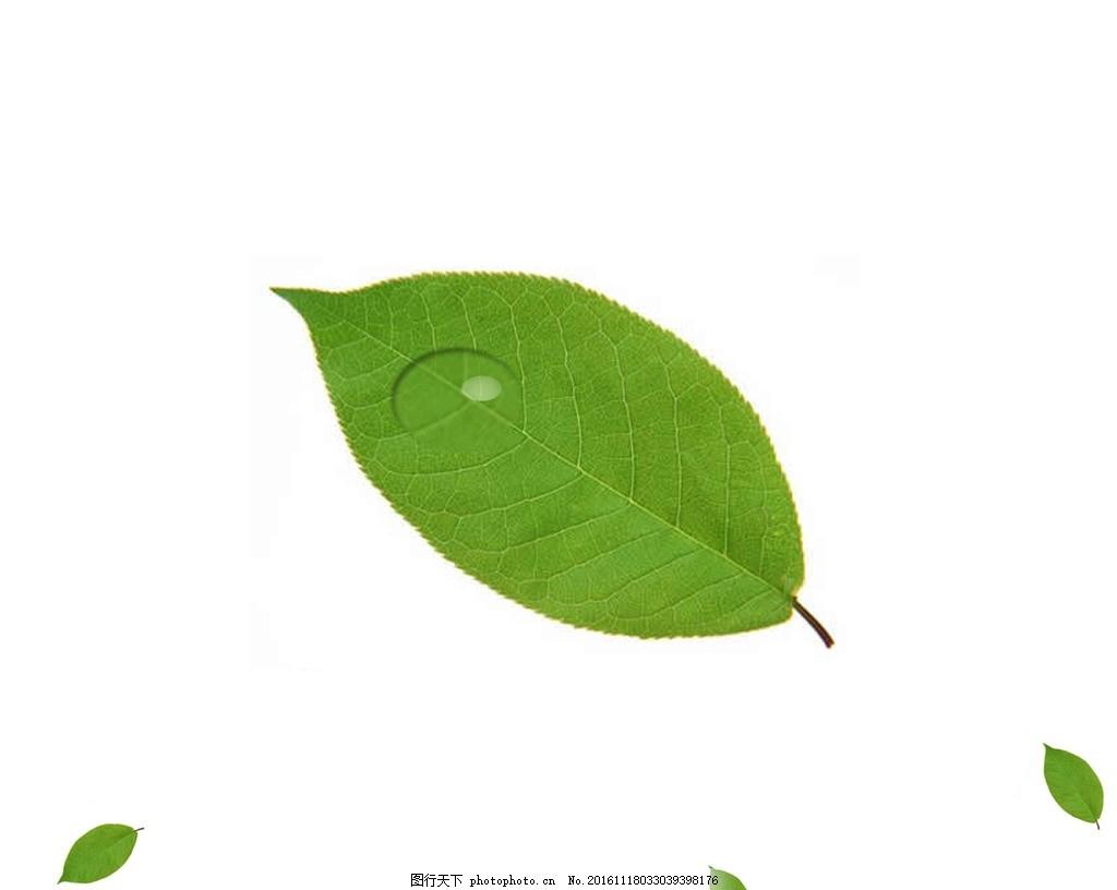 树叶露珠 树叶 露珠 绿色树叶 露珠圆 小树叶 绿色 设计 psd分层素材