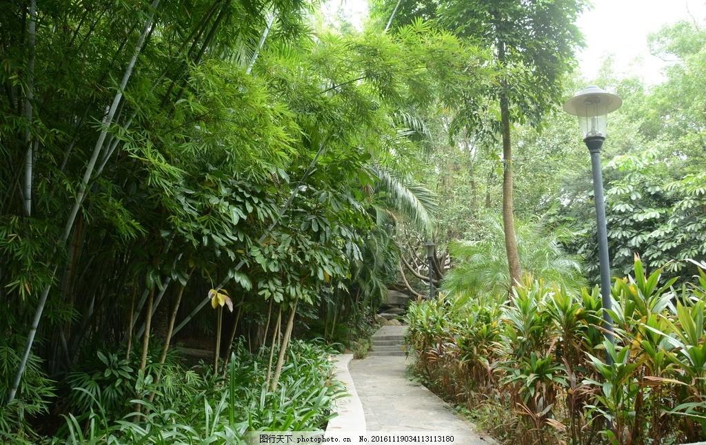 树林小路 树藤 绿色树林 风景 草地 树木 大自然 摄影 自然景观 山水