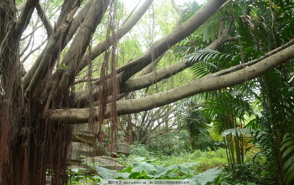 树藤 绿色 树林 风景 草地 树木 大自然 摄影 自然景观 山水风景 摄影