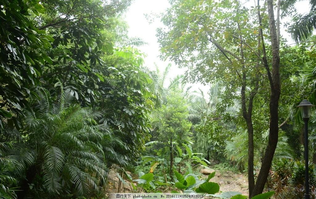 树藤 绿色树林 风景 草地 树木 大自然 摄影 自然景观 山水风景 摄影