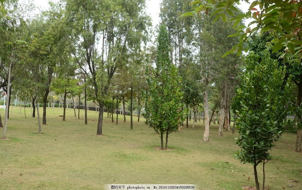 草地绿树 草坪 绿草 自然风光 公园 园林风景 树木 环保 树林草地
