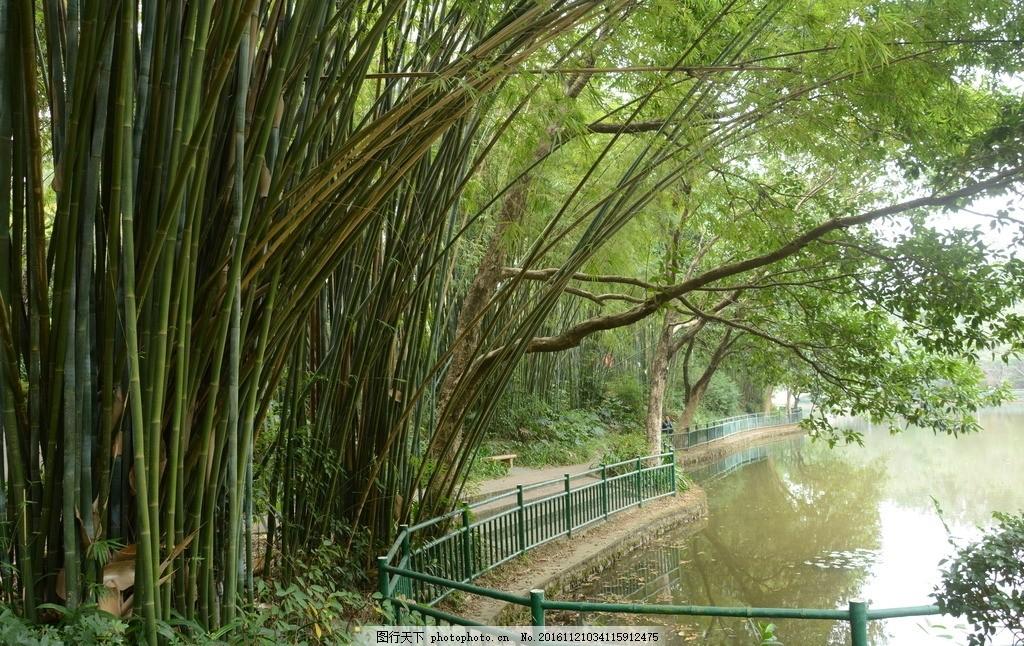 湖边竹林 竹子 竹林小路 摄影 自然 风景 自然景观 小路 摄影 自然