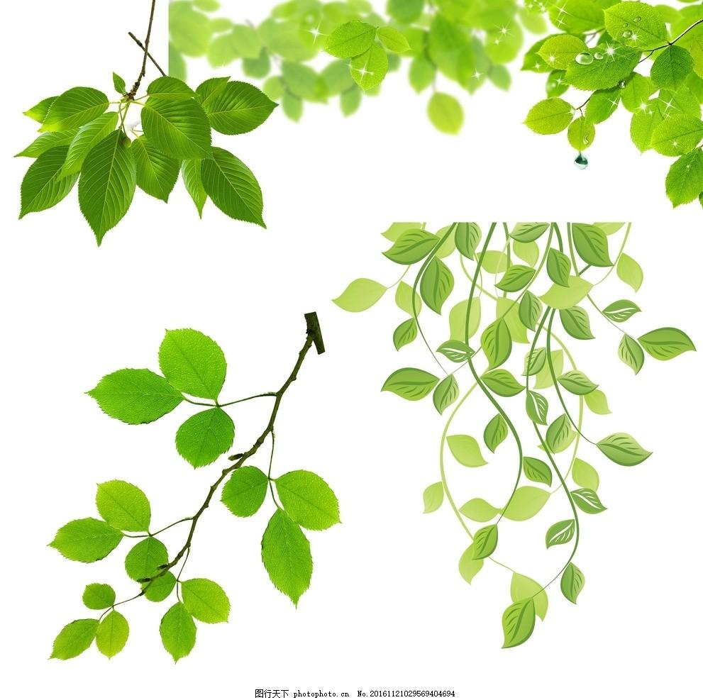 树叶 树枝 绿叶 树叶大全 梦幻 矢量树叶 春天树叶 叶子 青翠绿叶素材