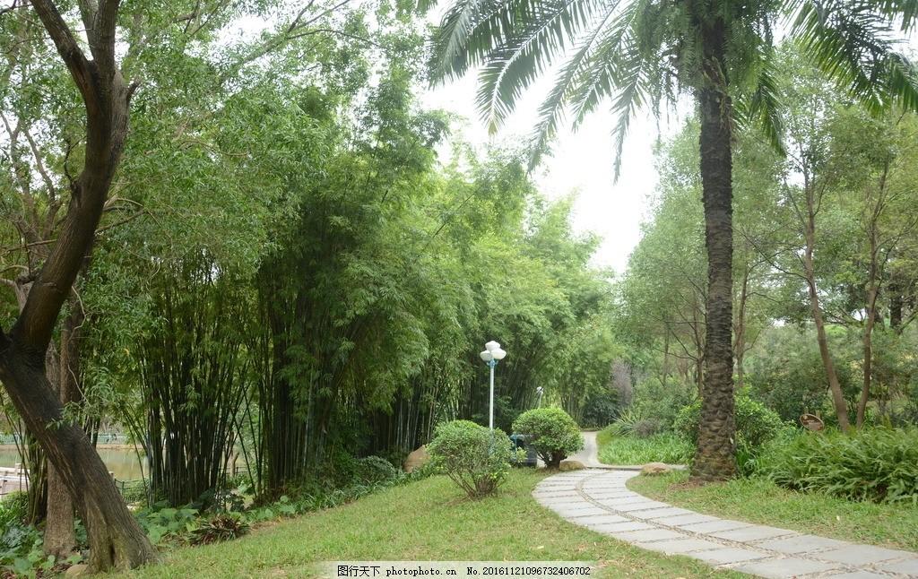 树林风景 蓝天 草地 树木 大自然 摄影 自然景观 山水风景 自然风景