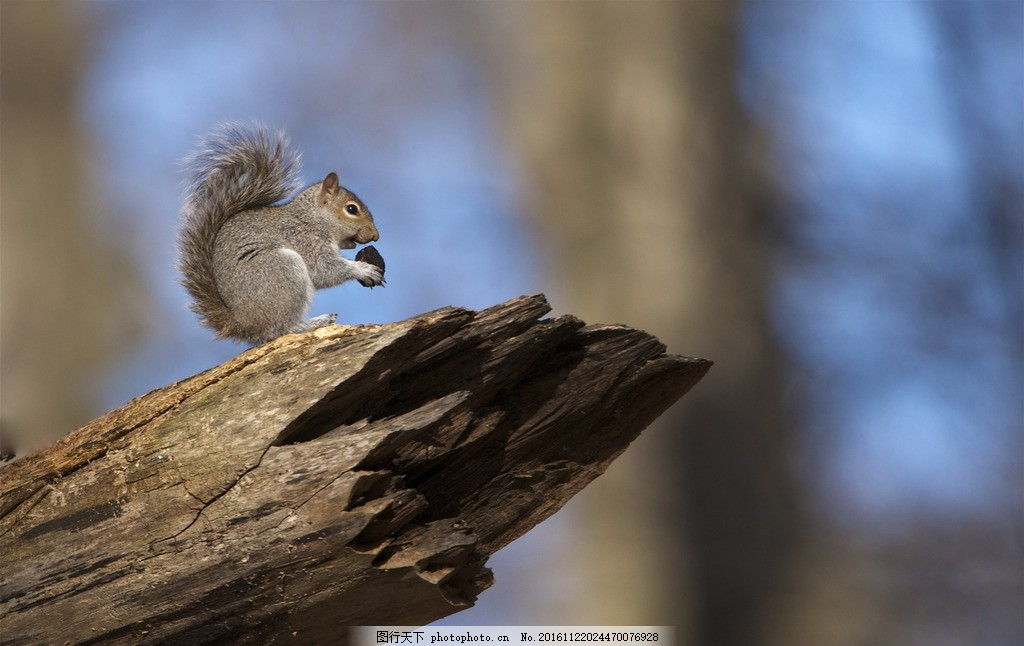 松鼠 可爱 萌 吃 卖萌 精灵 摄影 生物世界 野生动物 72dpi jpg