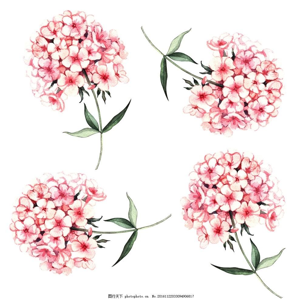 绣球花 鲜花 水彩花 花朵 花卉 彩绘花卉 水墨花 手绘花卉 彩色花