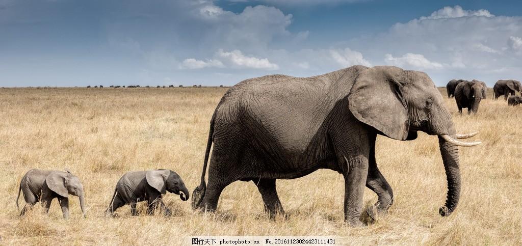大象 象 小象 巨大 可爱 草地 摄影 生物世界 野生动物 240dpi jpg