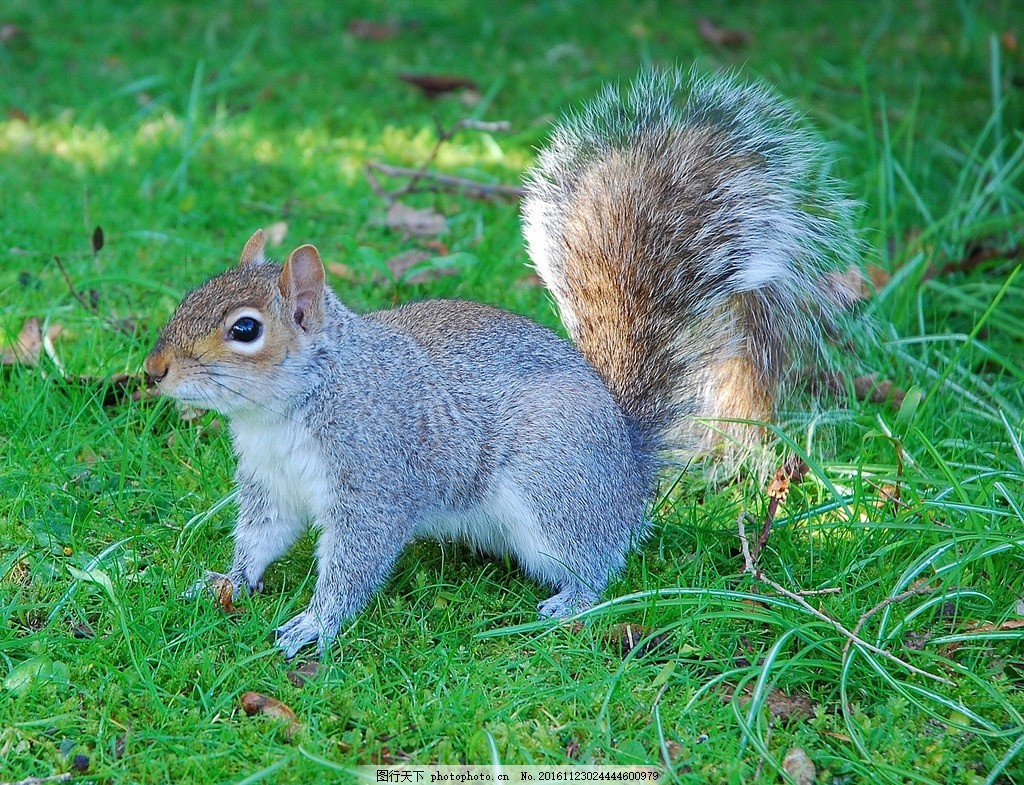 松鼠 可爱 萌 吃 卖萌 精灵 摄影 生物世界 野生动物 300dpi jpg