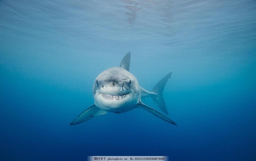鲨鱼 动物 海底世界 野生 生态 摄影