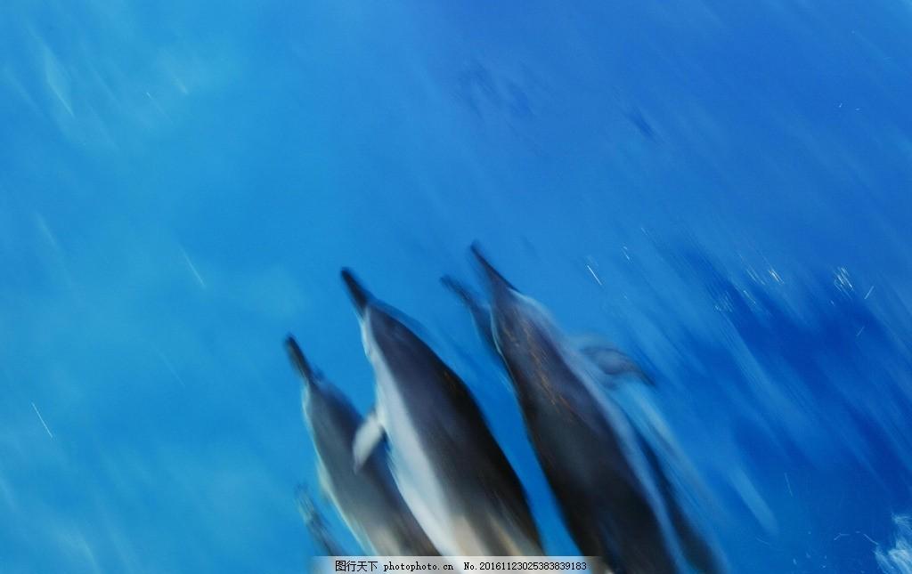 海豚 动物 海底世界 野生 生态 鱼 摄影