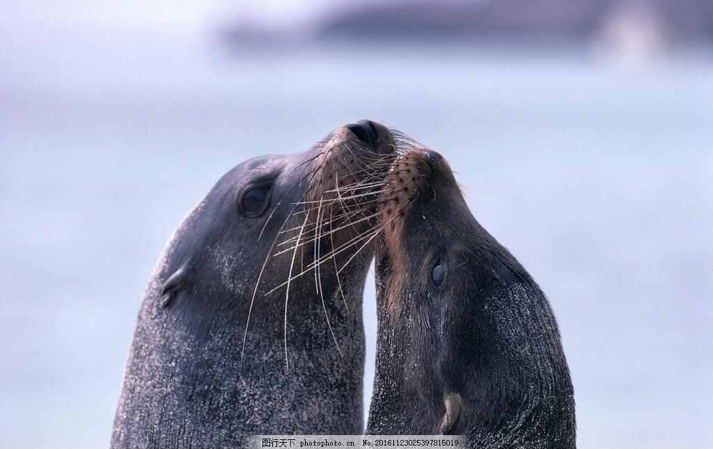 动物 海底世界 野生 生态 鱼 海豹 动物 摄影 生物世界 海洋生物 96