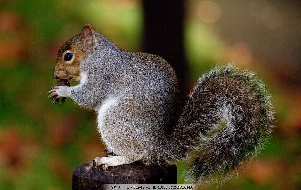 松鼠 可爱 萌 吃 卖萌 精灵 摄影 生物世界 野生动物 240dpi jpg