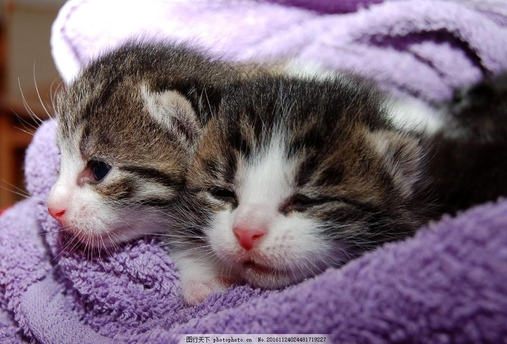 猫 小猫 猫咪 花猫 宠物猫 可爱的小猫 动物 动物世界 可爱猫