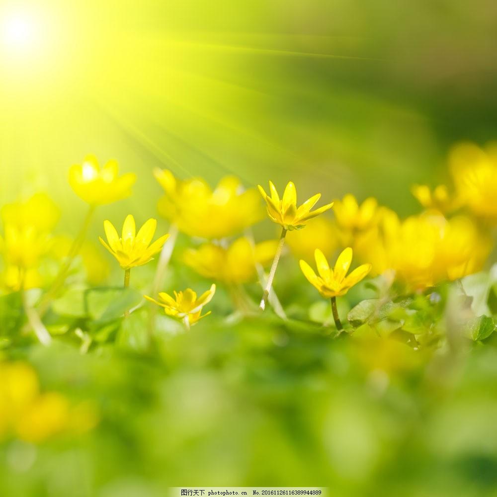 绿色清新背景图片素材 春天 春季 鲜花背景 花朵 花卉 梦幻背景 绿色