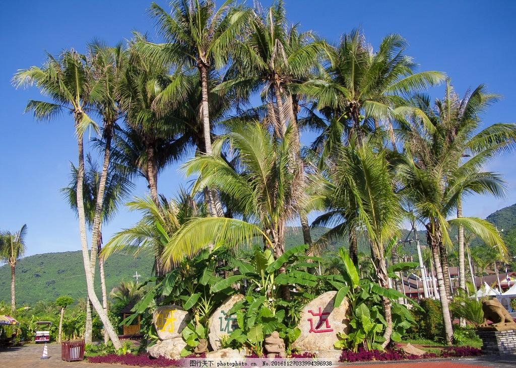 呀诺达热带雨林 呀诺达 呀诺达雨林 海南 三亚 槟榔树 热带植物 三亚