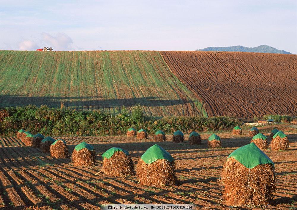 田园草垛风景图片素材 四季风景 美丽风景 美景 自然景色 树木 田园风