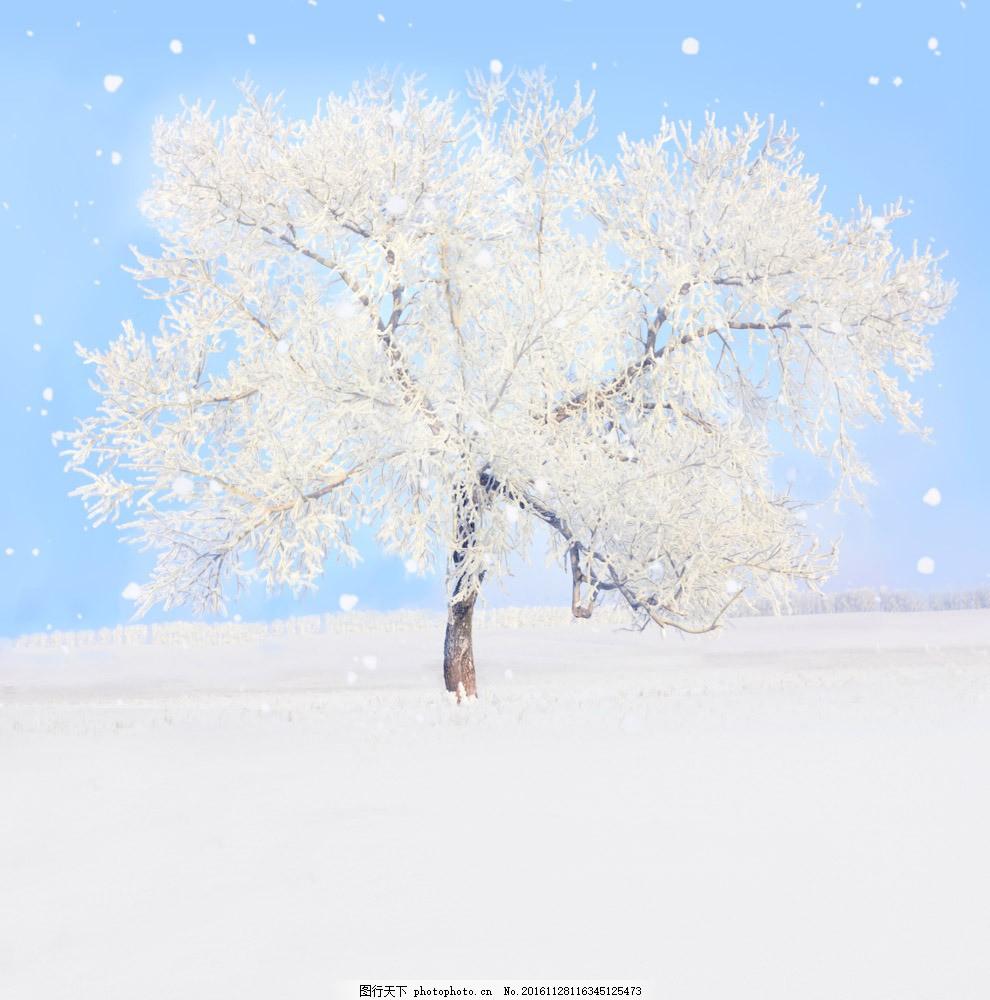 美丽冬天风景 美丽冬天风景图片素材 冬天雪景 雪地 雪地上的树