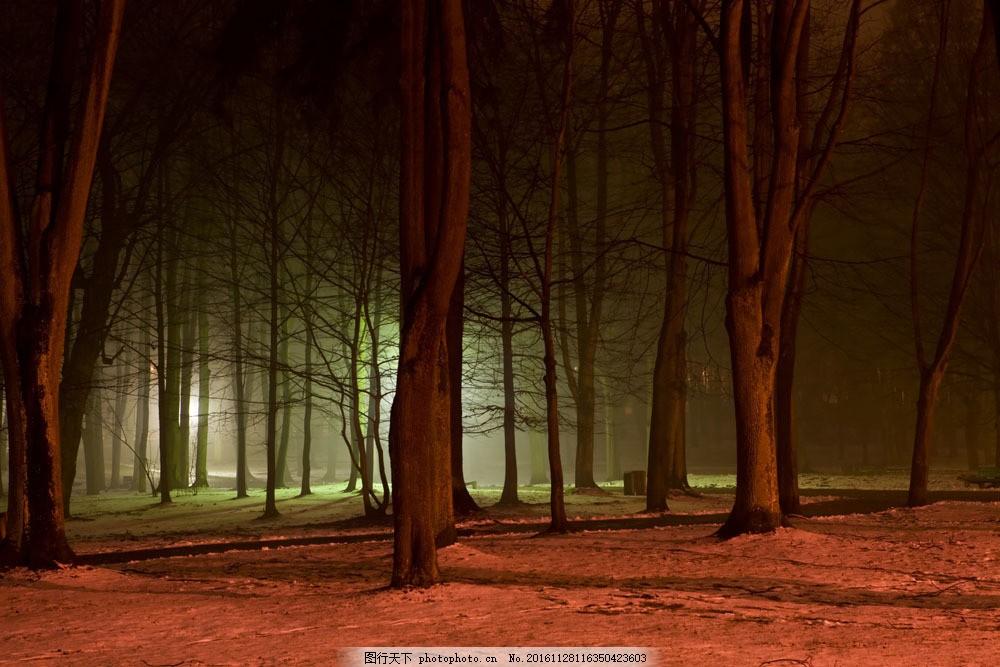 森林夜景图片