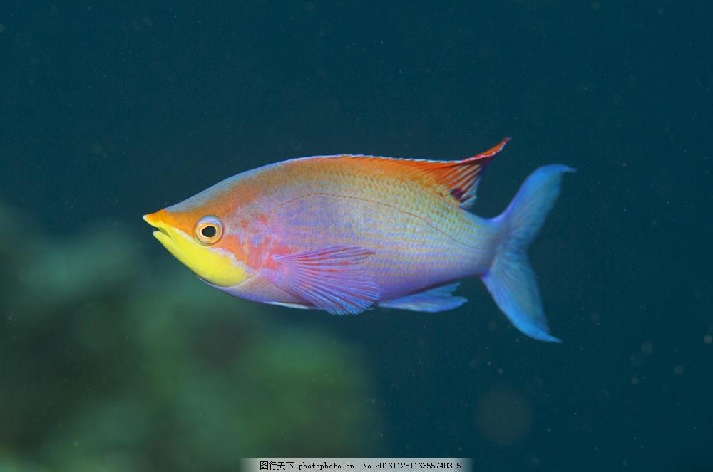 壁纸 动物 鱼 鱼类 1000_663