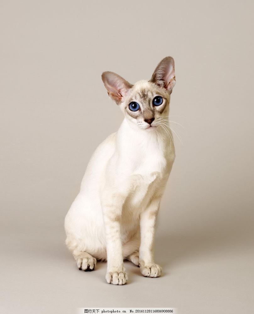 壁纸 动物 猫 猫咪 小猫 桌面 808_1000 竖版 竖屏 手机