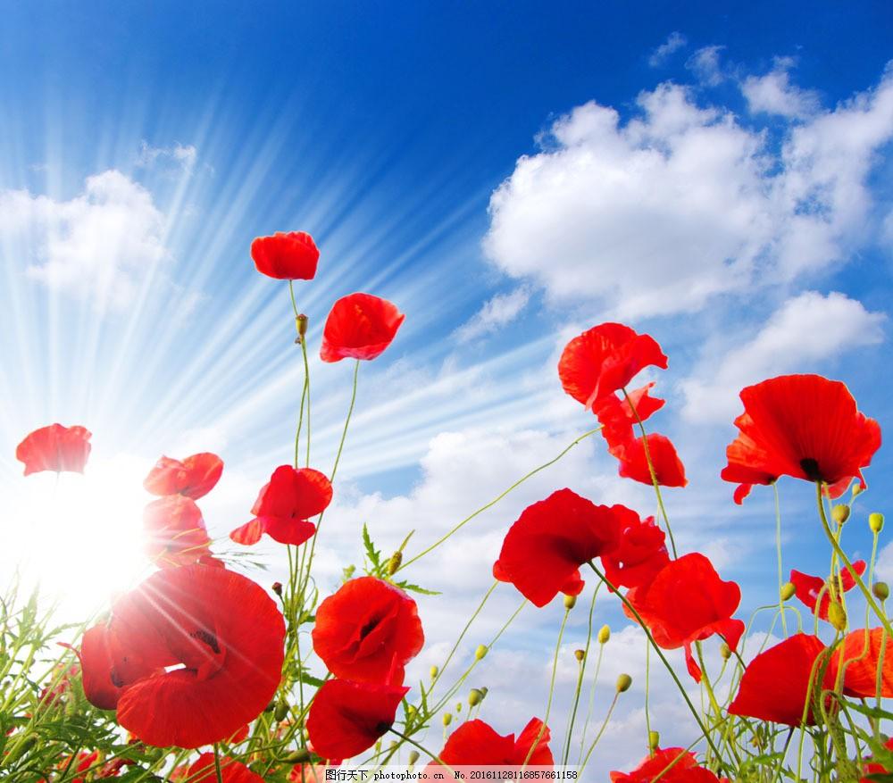 蓝天白云红色花朵图片