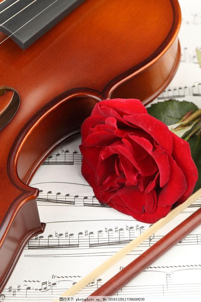 小提琴五线谱与玫瑰花图片