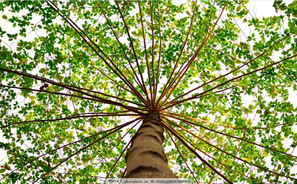 绿色大树 绿色 树 叶子 背景 ppt 设计 自然景观 自然风光 300dpi