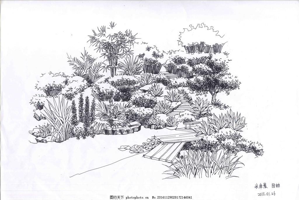 园林景观手绘线稿 钢笔手绘 线稿 植物线稿 植物手绘 阴影 石头手绘