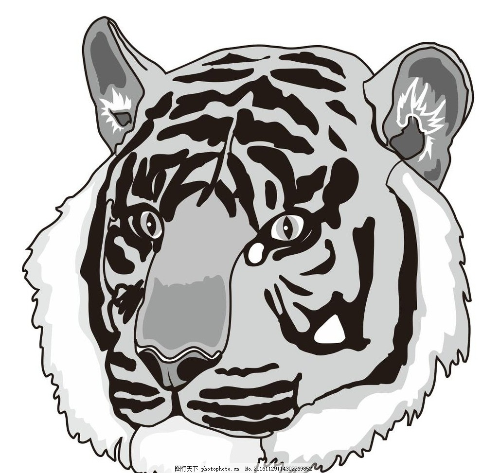 虎头 动物 野生动物 插画 装饰画 简笔画 线条 线描 简画 黑白画 卡