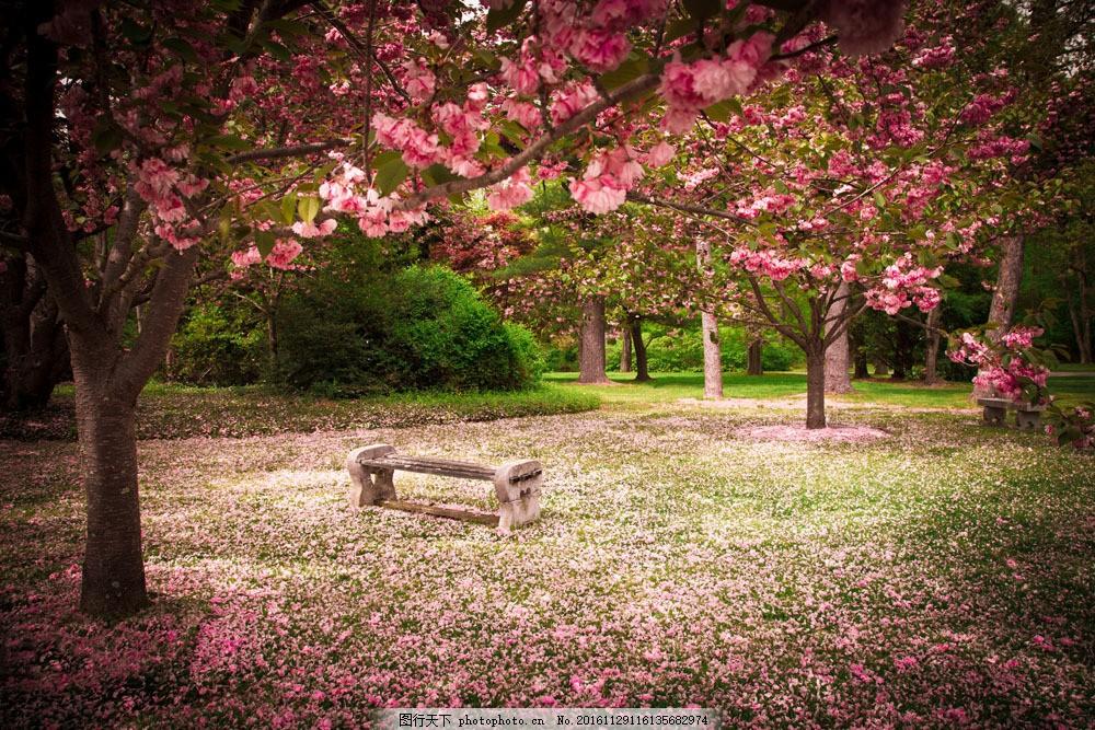 花树风景图片素材 美丽花树 粉红花树 花树 花朵 植物 花枝 梦幻背景