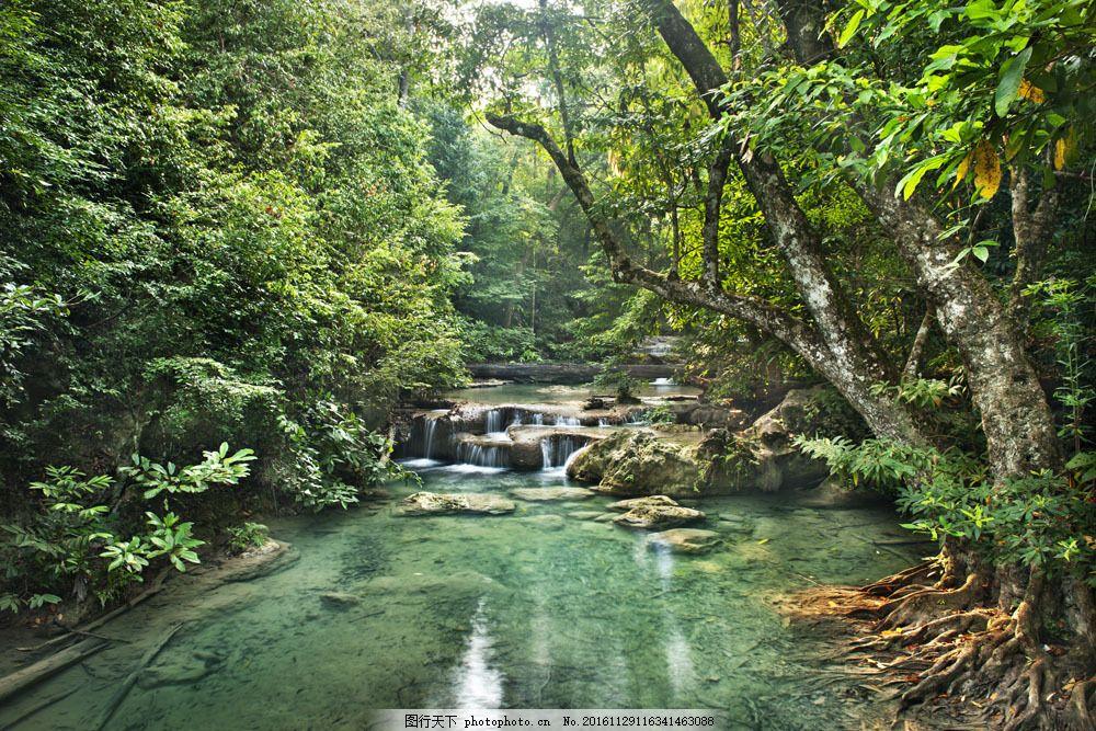 树林间的小溪图片