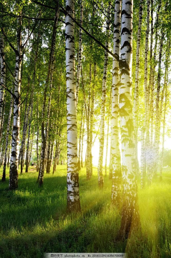 阳光 光线 梦幻 仙境 森林 树木 树 树枝 美丽树林 森林风景 自然风景
