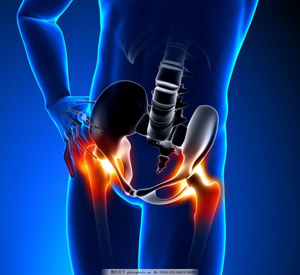 大腿骨盆骨骼器官图片