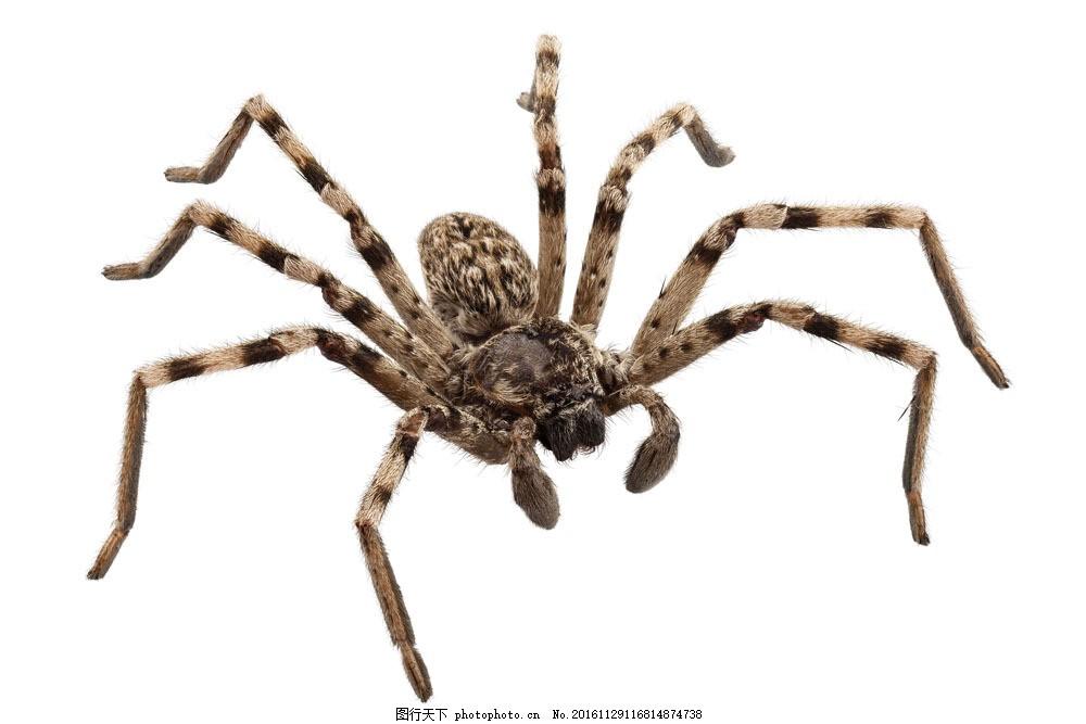 蜘蛛摄影图片素材 蜘蛛 节肢动物 动物摄影 动物世界 动物昆虫 昆虫