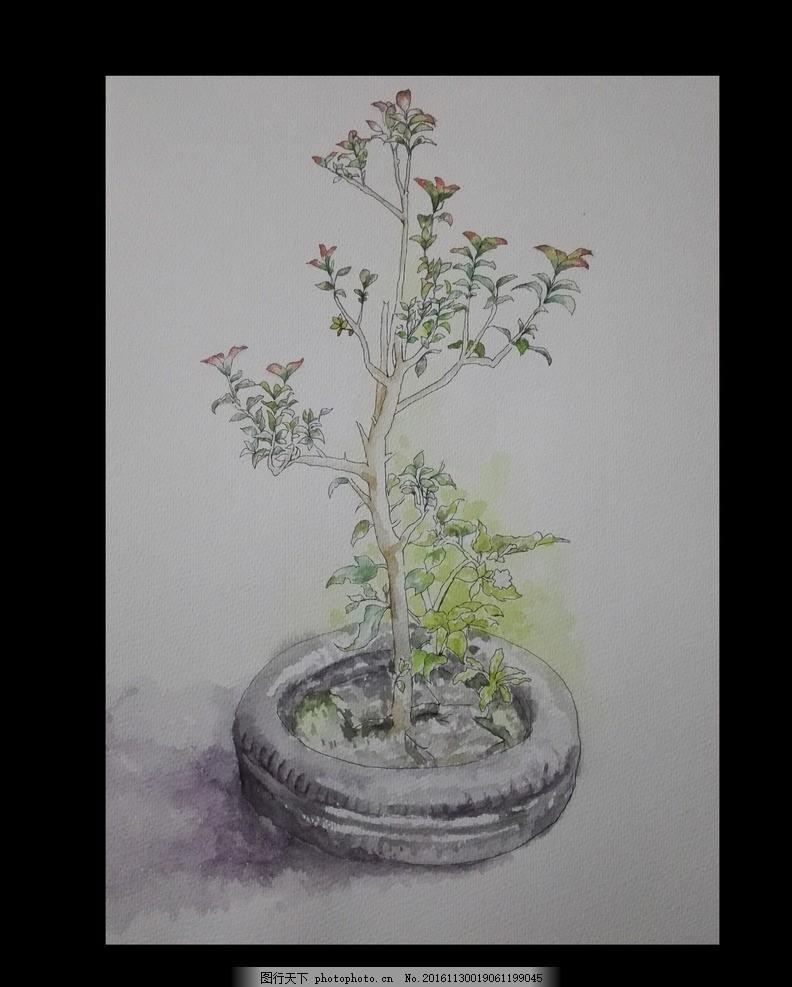 轮胎中的植物 速写 水彩 钢笔淡彩 风景 写生 写生 摄影 文化艺术