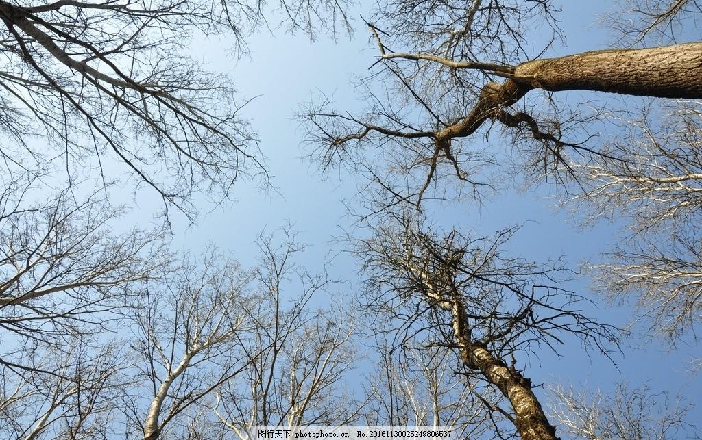 冬天森林 森林 茂密 树林 原始 大树 冬天 冬季 雪 下雪 雪景 寒冷 植物 乔木 壮观 壮丽 植被 大气 唯美 自然 大自然 景观 景物 丛林 海报 背景 高清 素材 摄影 自然景观 自然风景 72DPI JPG 5花卉植物系列 摄影 生物世界 树木树叶 72DPI JPG