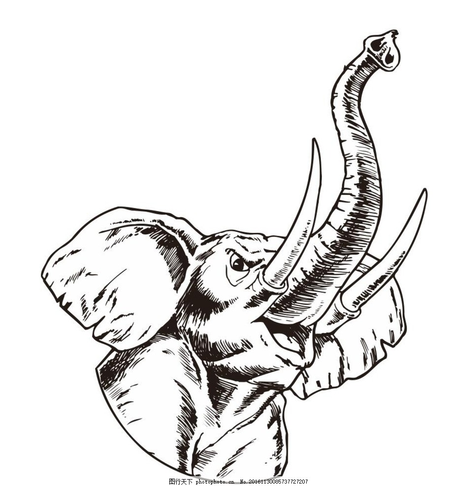 大象 像头 动物 野生动物 插画 装饰画 简笔画 线条 线描 简画 黑白画