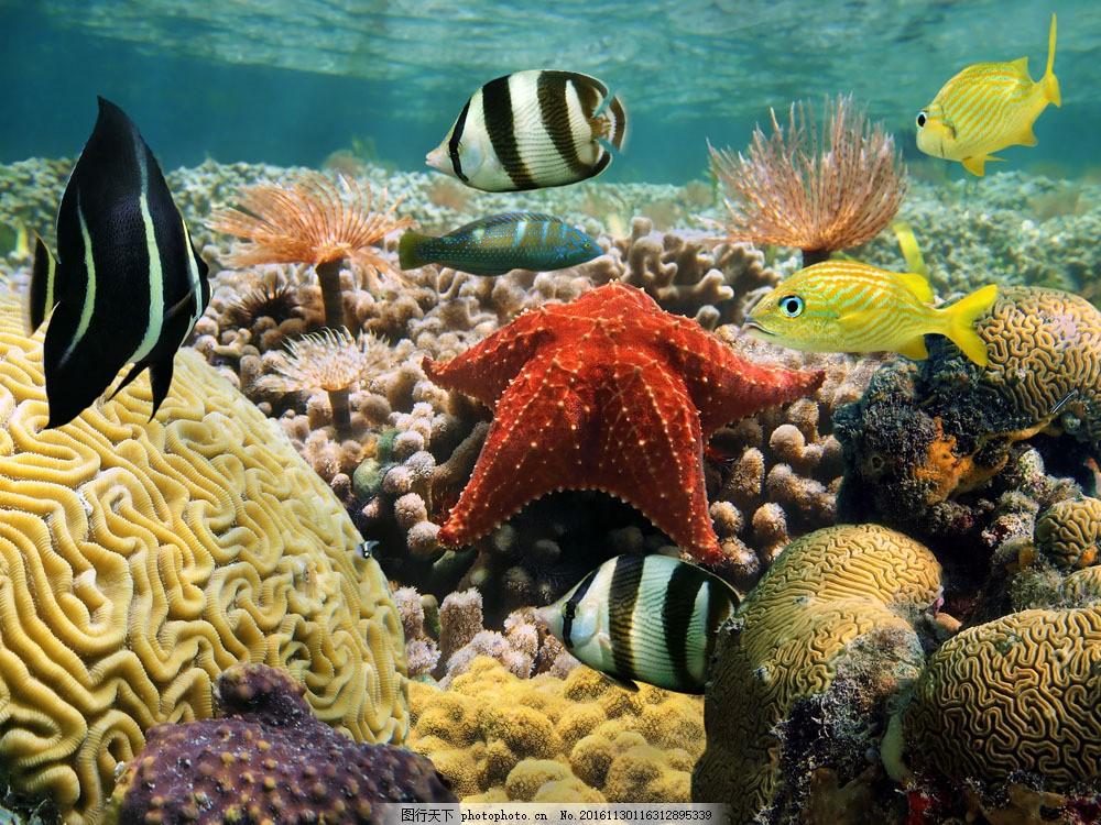 海底世界摄影素材 海底世界摄影素材图片素材 鱼 海星 珊瑚 动物