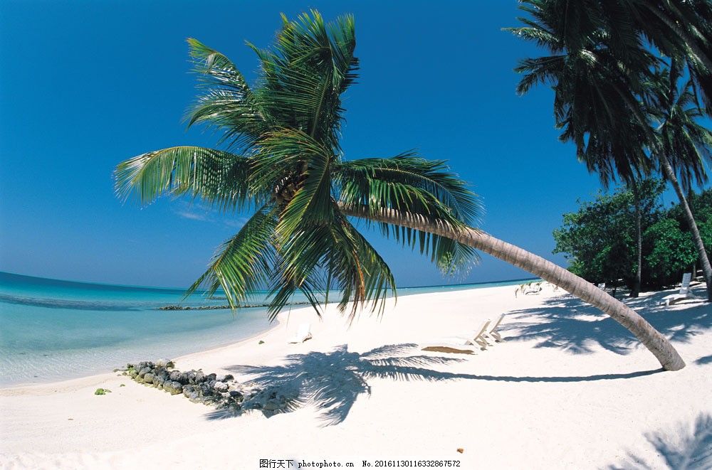 海南椰子樹圖片,海南椰子樹圖片素材 三亞 風景區 -圖
