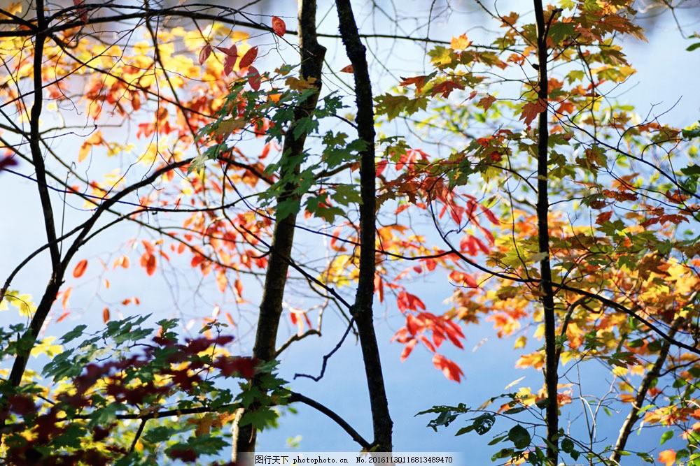 秋天风景摄影 秋天风景摄影图片素材 秋景 秋天色彩 枫叶 叶子